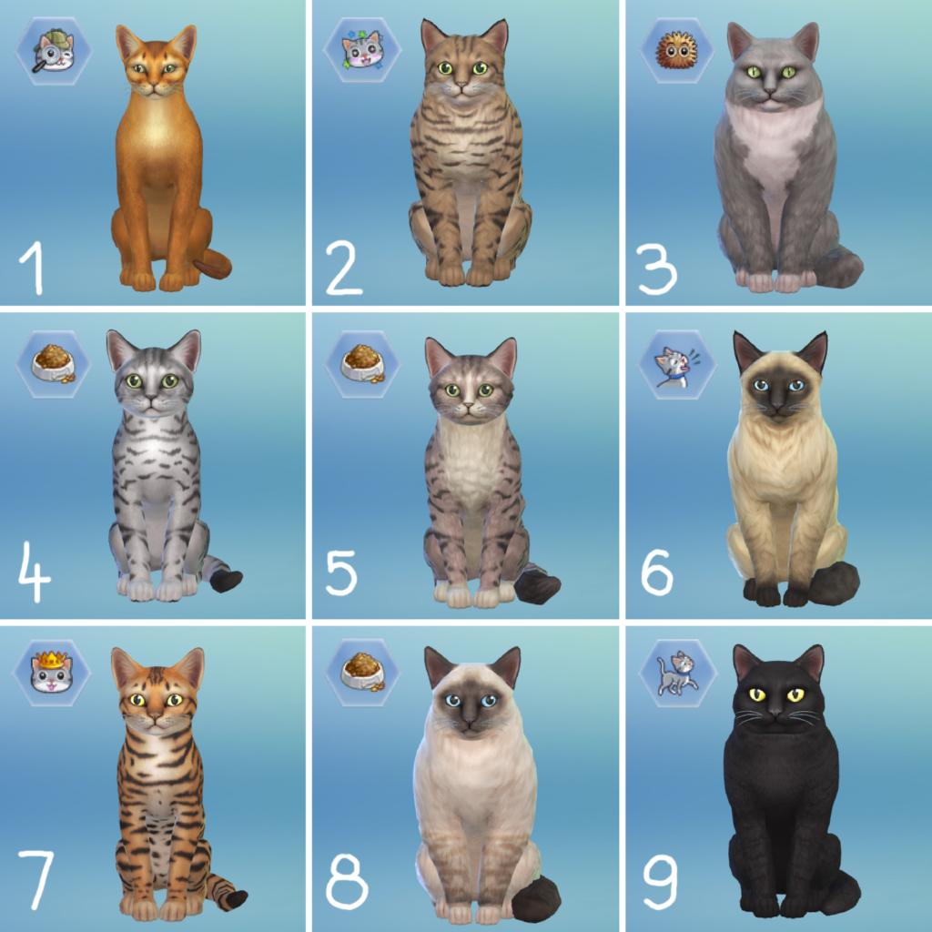 Rasy kotów - The Sims 4 Psy i koty