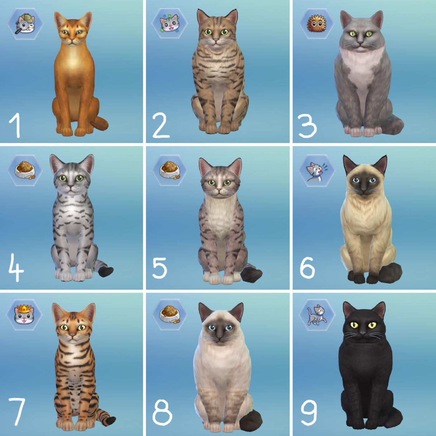 Asiafantasia Koty W The Sims 4